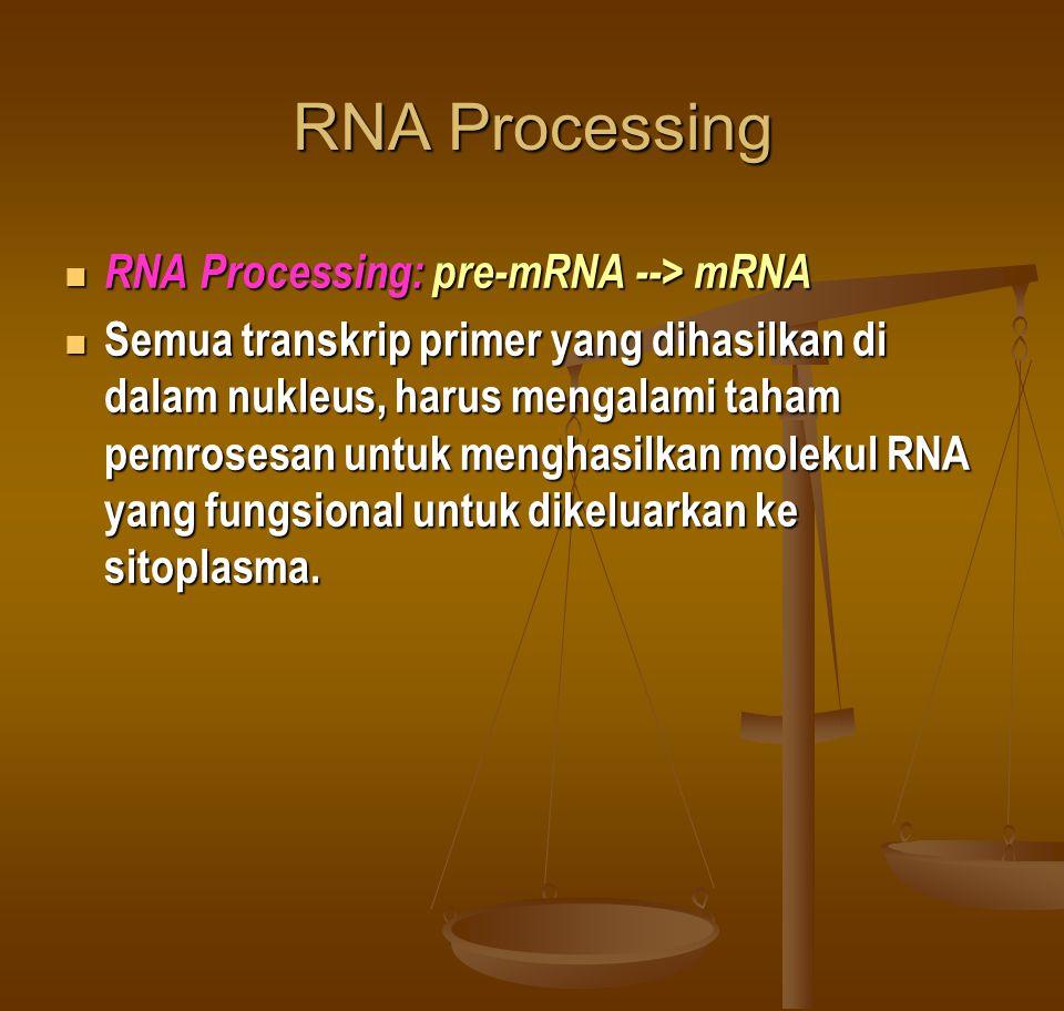 RNA Processing RNA Processing: pre-mRNA --> mRNA RNA Processing: pre-mRNA --> mRNA Semua transkrip primer yang dihasilkan di dalam nukleus, harus mengalami taham pemrosesan untuk menghasilkan molekul RNA yang fungsional untuk dikeluarkan ke sitoplasma.