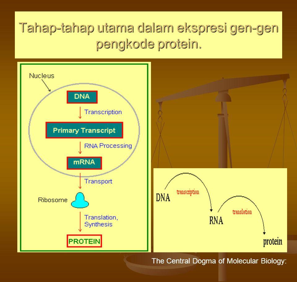 Tahap-tahap utama dalam ekspresi gen-gen pengkode protein. The Central Dogma of Molecular Biology: