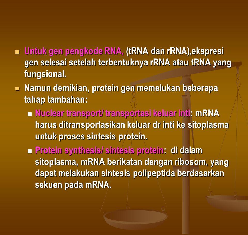 Transkripsi Transcripsi: adalah proses pengkopian DNA untuk menghasilkan transkrip RNA komplemennya / RNA transcript.