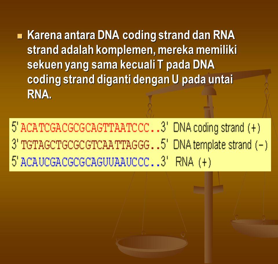 3.Termination (pemberhentian) Transkripsi Bagaimana RNA polymerase mengetahui tempat berhentinya.