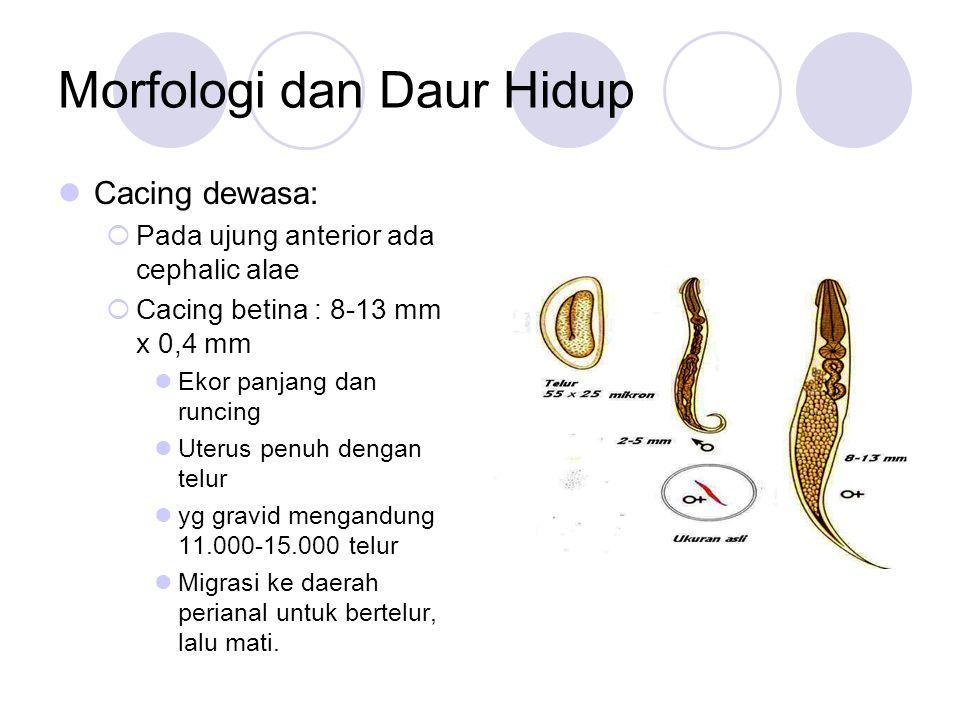 Morfologi dan Daur Hidup Cacing dewasa:  Pada ujung anterior ada cephalic alae  Cacing betina : 8-13 mm x 0,4 mm Ekor panjang dan runcing Uterus penuh dengan telur yg gravid mengandung 11.000-15.000 telur Migrasi ke daerah perianal untuk bertelur, lalu mati.