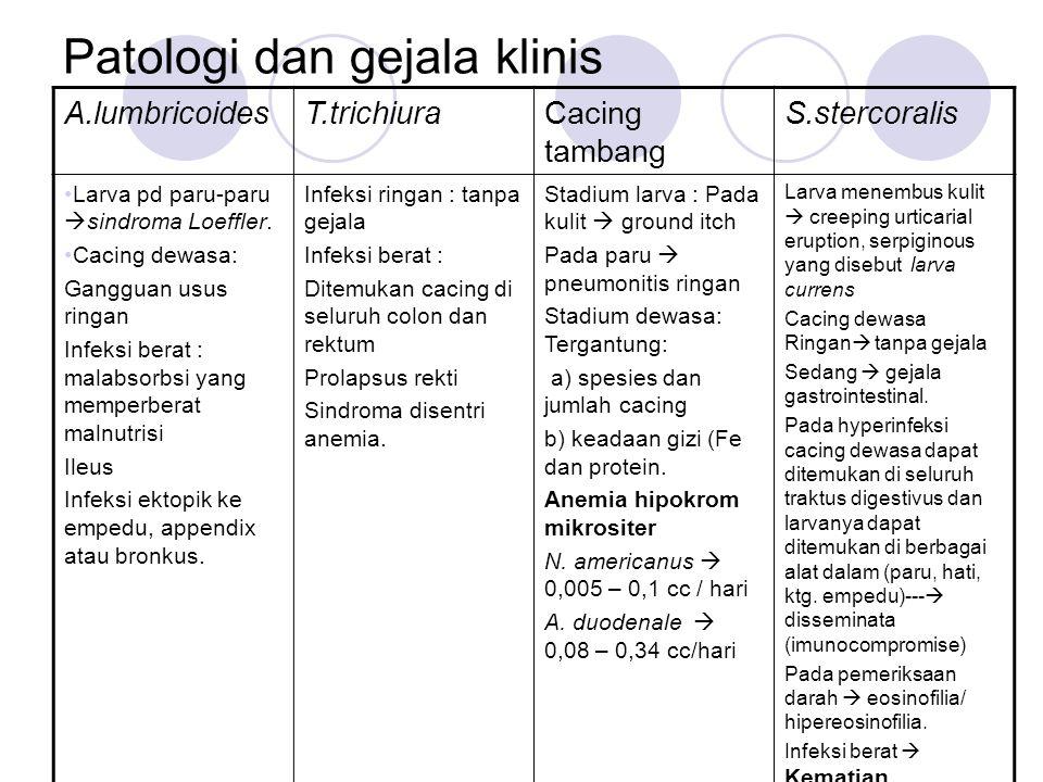 Patologi dan gejala klinis A.lumbricoidesT.trichiuraCacing tambang S.stercoralis Larva pd paru-paru  sindroma Loeffler. Cacing dewasa: Gangguan usus