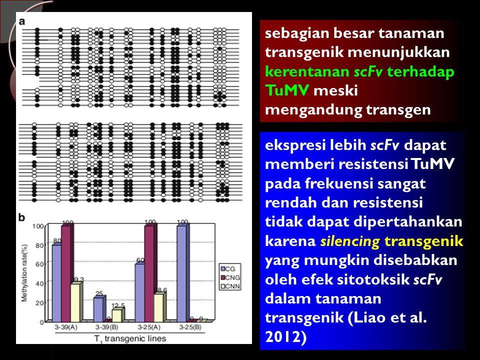 sebagian besar tanaman transgenik menunjukkan kerentanan scFv terhadap TuMV meski mengandung transgen ekspresi lebih scFv dapat memberi resistensi TuMV pada frekuensi sangat rendah dan resistensi tidak dapat dipertahankan karena silencing transgenik yang mungkin disebabkan oleh efek sitotoksik scFv dalam tanaman transgenik (Liao et al.