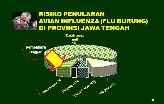 55 Pemelihara unggas RISIKO PENULARAN AVIAN INFLUENZA (FLU BURUNG) DI PROVINSI JAWA TENGAH