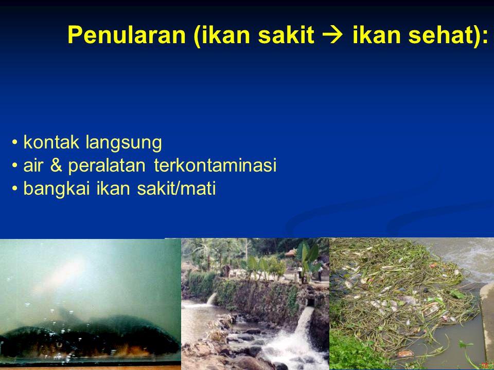 30 kontak langsung air & peralatan terkontaminasi bangkai ikan sakit/mati Penularan (ikan sakit  ikan sehat):