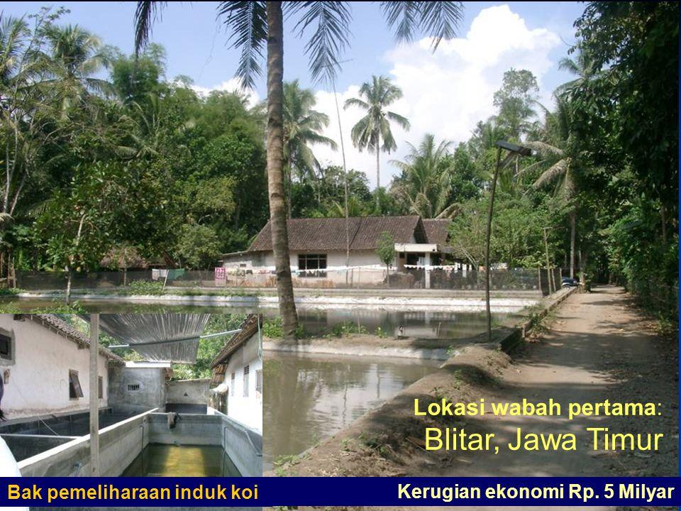 35 Lokasi wabah pertama: Blitar, Jawa Timur Bak pemeliharaan induk koi Kerugian ekonomi Rp. 5 Milyar