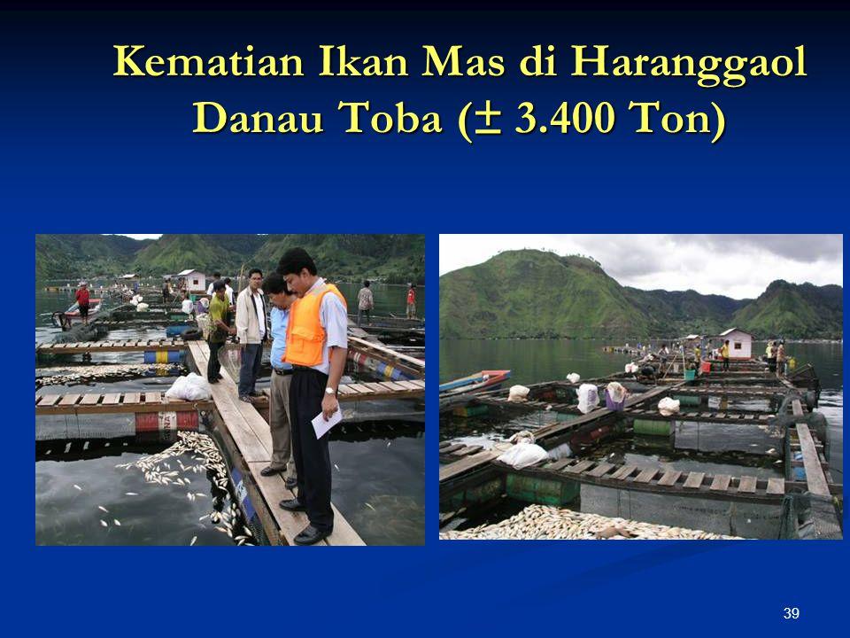39 Kematian Ikan Mas di Haranggaol Danau Toba (± 3.400 Ton)