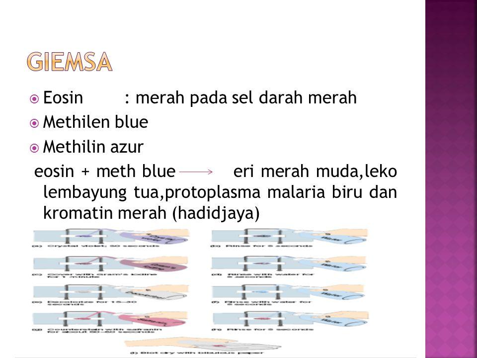  Eosin : merah pada sel darah merah  Methilen blue  Methilin azur eosin + meth blue eri merah muda,leko lembayung tua,protoplasma malaria biru dan kromatin merah (hadidjaya)