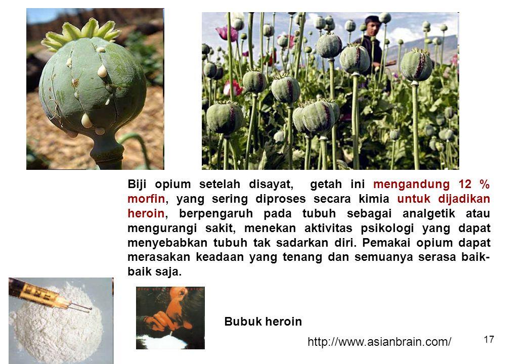 17 Biji opium setelah disayat, getah ini mengandung 12 % morfin, yang sering diproses secara kimia untuk dijadikan heroin, berpengaruh pada tubuh seba