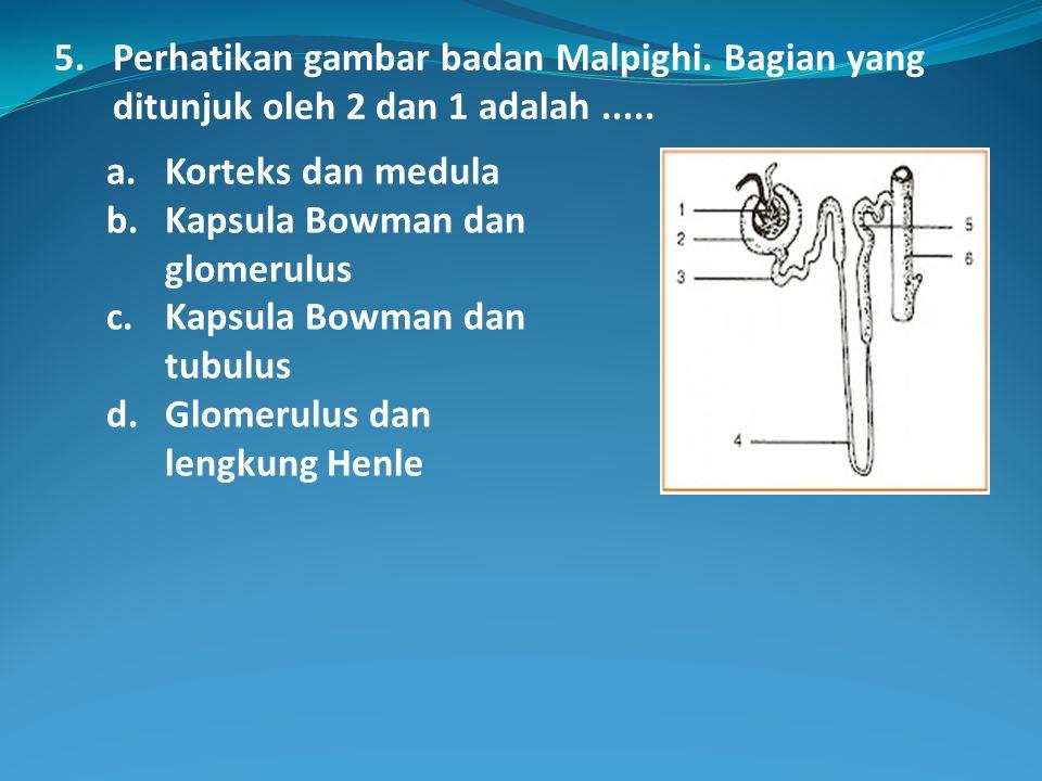 5.Perhatikan gambar badan Malpighi. Bagian yang ditunjuk oleh 2 dan 1 adalah.....
