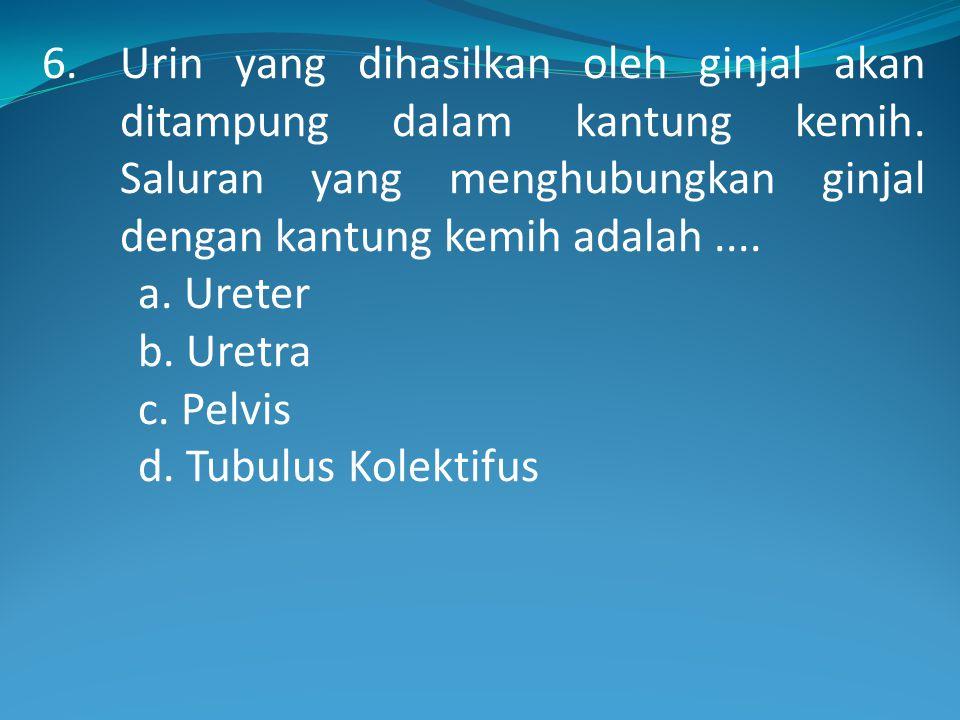 6.Urin yang dihasilkan oleh ginjal akan ditampung dalam kantung kemih.