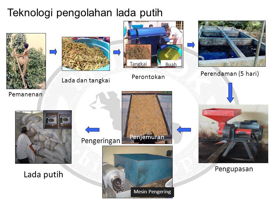 Perontokan Pemanenan Lada dan tangkai Buah Tangkai Perendaman (5 hari) Pengupasan Pengeringan Penjemuran Mesin Pengering Lada putih Teknologi pengolah