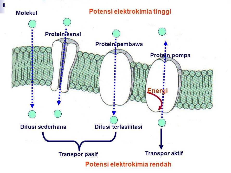 Molekul Difusi sederhana Protein kanal Protein pembawa Protein pompa Difusi terfasilitasi Transpor pasif Transpor aktif Energi Potensi elektrokimia ti