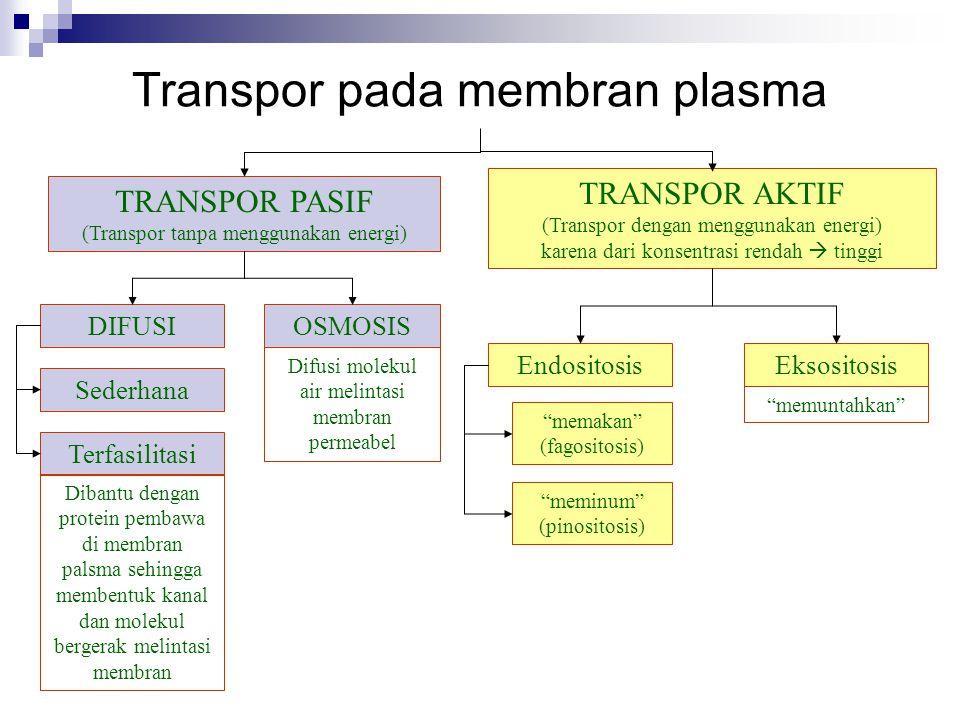 TRANSPOR PASIF (Transpor tanpa menggunakan energi) TRANSPOR AKTIF (Transpor dengan menggunakan energi) karena dari konsentrasi rendah  tinggi Transpo