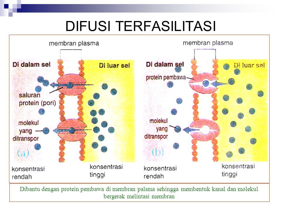 DIFUSI TERFASILITASI Dibantu dengan protein pembawa di membran palsma sehingga membentuk kanal dan molekul bergerak melintasi membran