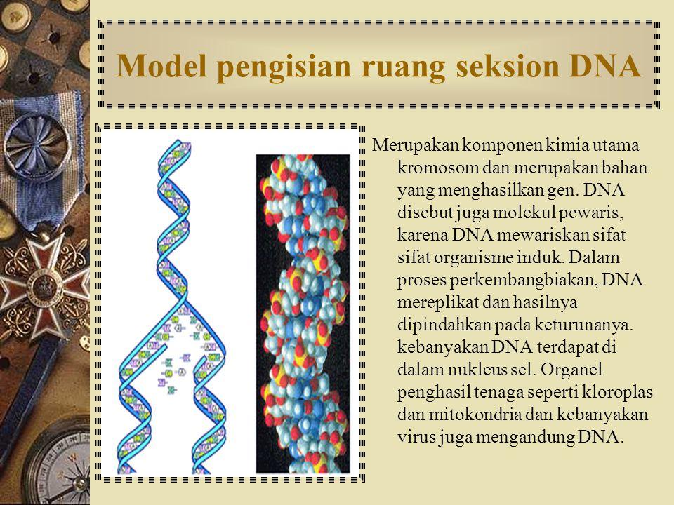 STRUKTUR RETIKULUM ENDOPLASMA [ R.E ] Struktur berbentuk benang-benang yang bermuara di inti sel. Hanya dapat dijumpai pada sel eukariotik, baik sel h