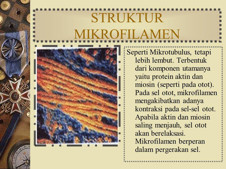 STRUKTUR MIKROTUBULUS Berbentuk benang silindris, kaku, berfungsi untuk mempertahankan bentuk sel dan sebagai