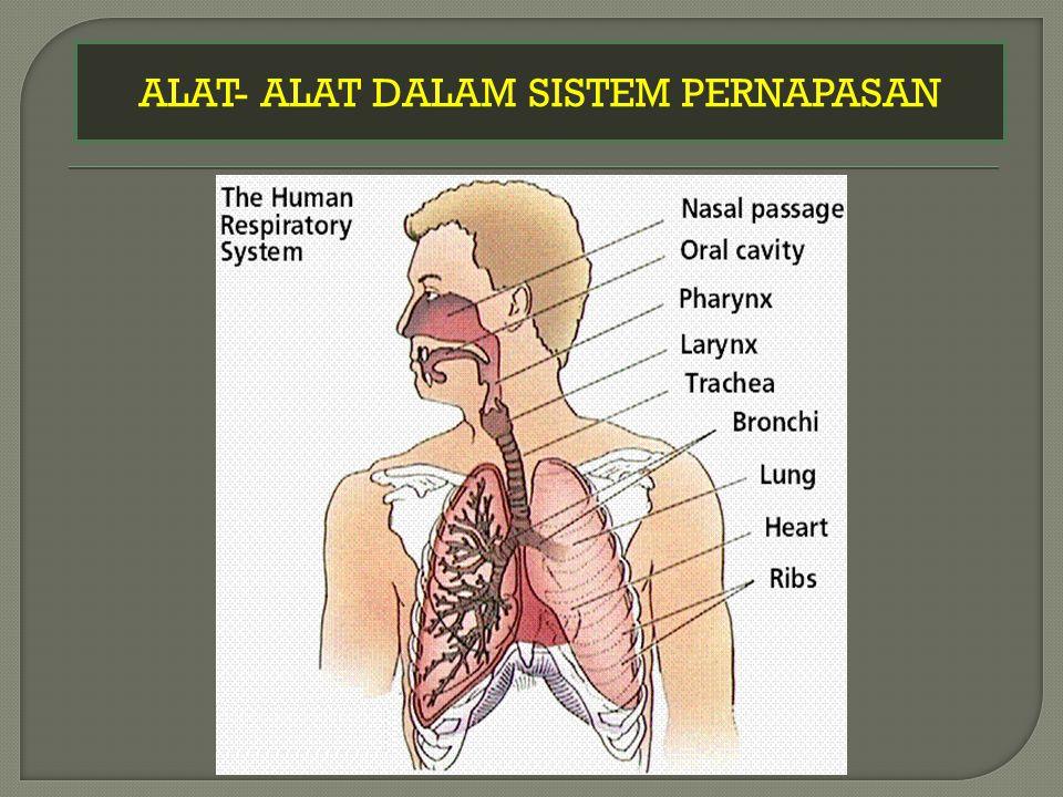 1.Alat pernapasan manusia adalah …. 2. Bagian dari hidung adalah ….
