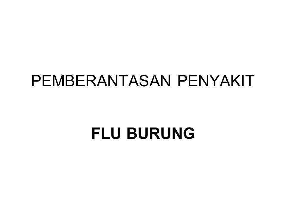 PEMBERANTASAN PENYAKIT FLU BURUNG