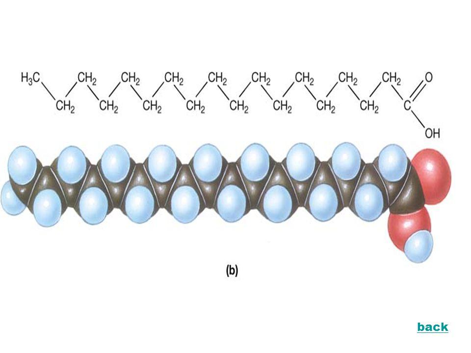 Sifat Kimia Lemak 2. Reaksi Hidrolisis lemak ester next