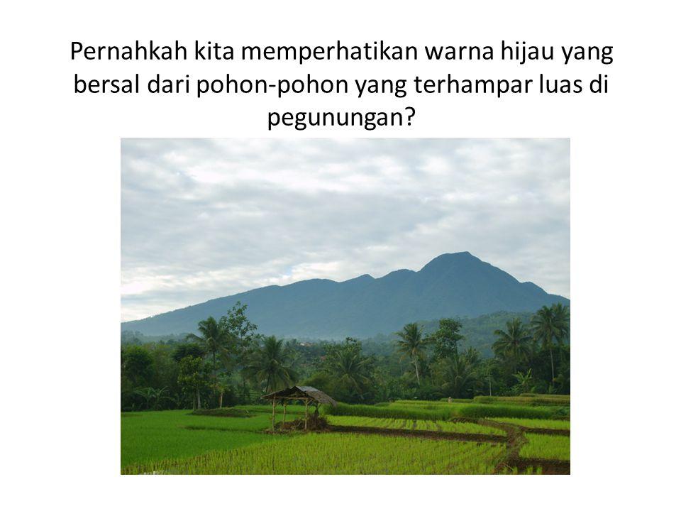 Pernahkah kita memperhatikan warna hijau yang bersal dari pohon-pohon yang terhampar luas di pegunungan?