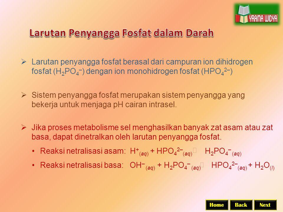 BackNextHome  Larutan penyangga fosfat berasal dari campuran ion dihidrogen fosfat (H 2 PO 4 – ) dengan ion monohidrogen fosfat (HPO 4 2– )  Jika proses metabolisme sel menghasilkan banyak zat asam atau zat basa, dapat dinetralkan oleh larutan penyangga fosfat.
