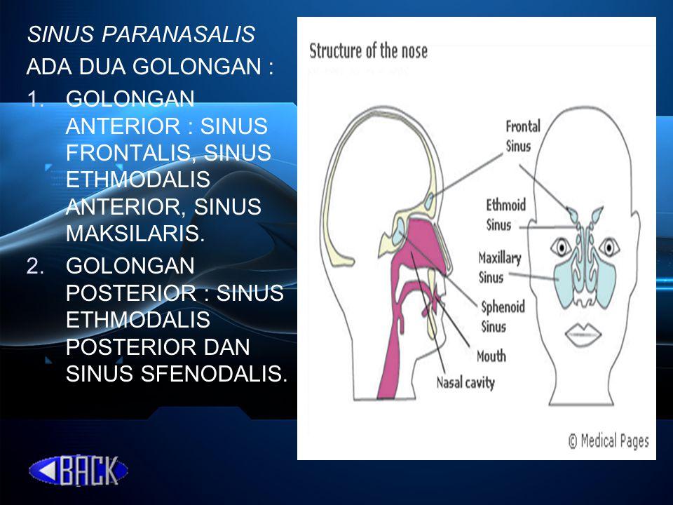 SINUS PARANASALIS ADA DUA GOLONGAN : 1.GOLONGAN ANTERIOR : SINUS FRONTALIS, SINUS ETHMODALIS ANTERIOR, SINUS MAKSILARIS. 2.GOLONGAN POSTERIOR : SINUS
