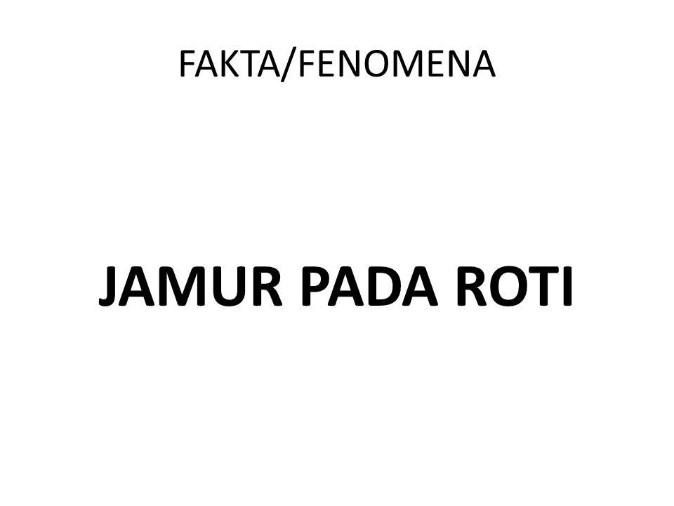 FAKTA/FENOMENA JAMUR PADA ROTI