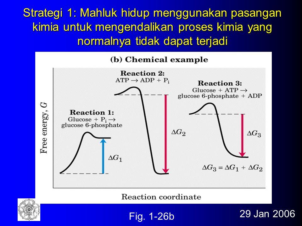 29 Jan 200610 (3) MEKANISME KiMIA, untuk: Memperoleh energi Mengendalikan reaksi kimia yang berurutan Mensintesis & mendegradasi makromolekul Memperta