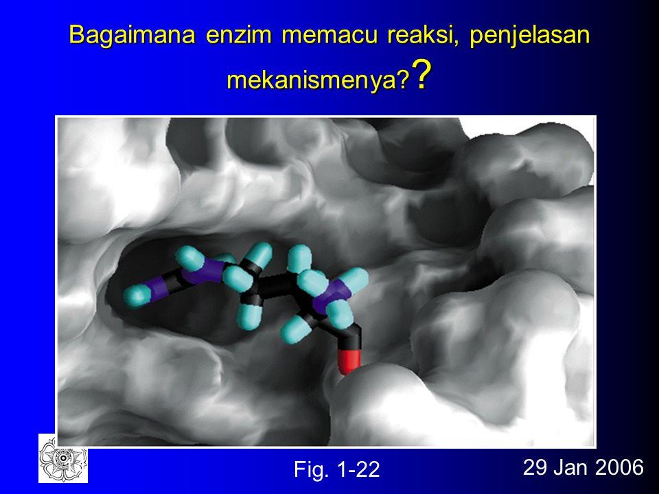 29 Jan 200613 Bagaimana enzim memacu reaksi, penjelasan termodinamikanya? Fig. 1-11