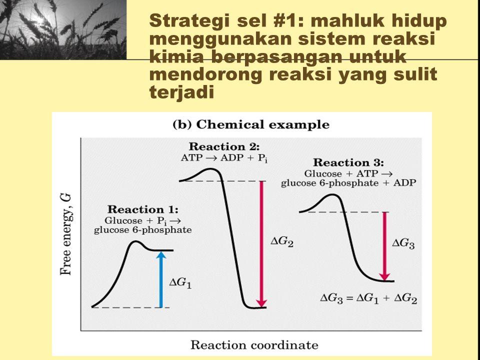 (3) MEKANISME KIMIA, untuk: Memperoleh energi Menjalankan reaksi kimia secara berurutan Mensintesis & mendegradasi makromolekul Mempertahankan suatu k