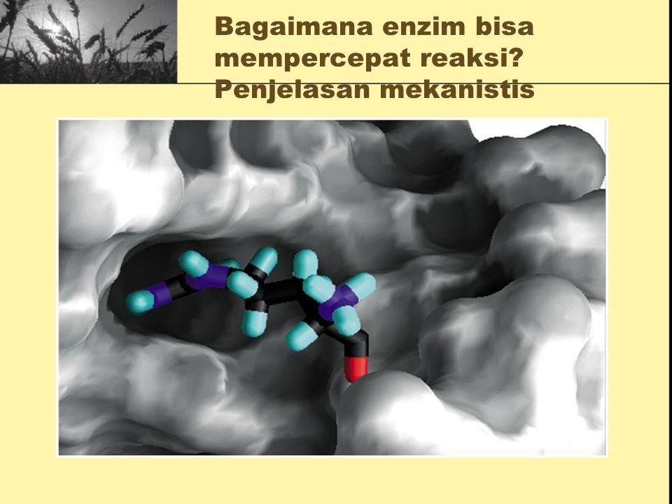 Bagaimana enzim bisa mempercepat reaksi? Penjelasan termodinamis