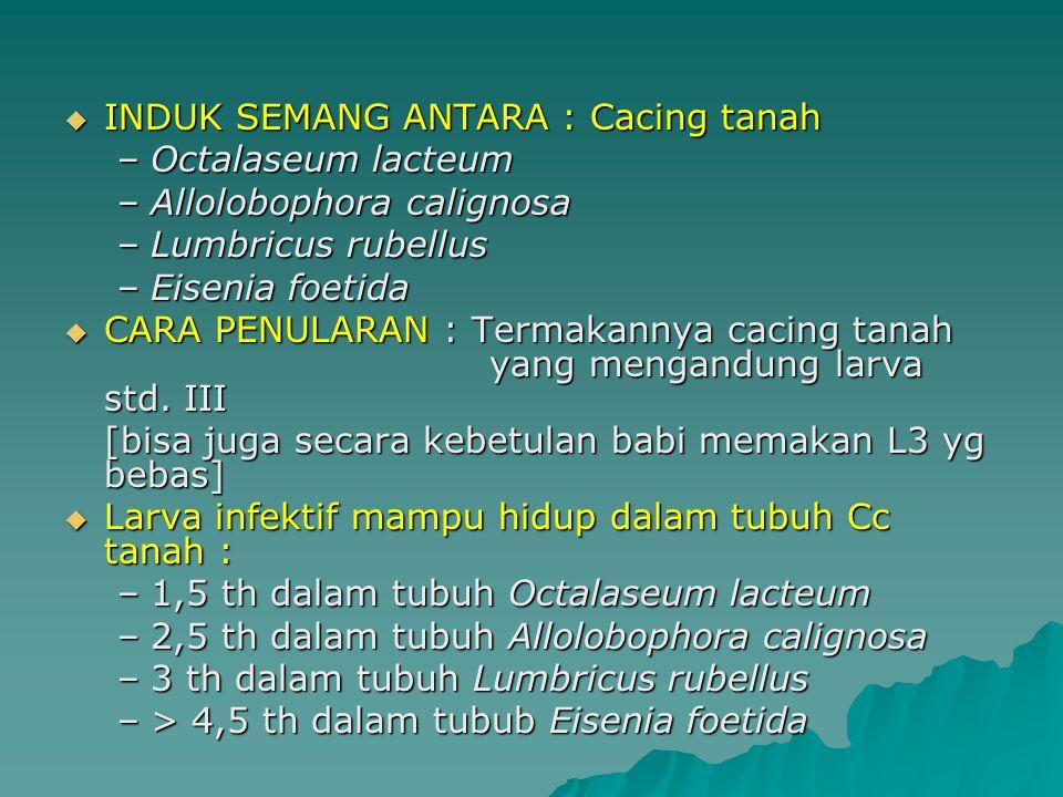  INDUK SEMANG ANTARA : Cacing tanah –Octalaseum lacteum –Allolobophora calignosa –Lumbricus rubellus –Eisenia foetida  CARA PENULARAN : Termakannya