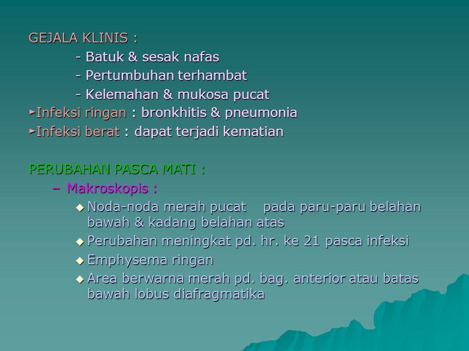 GEJALA KLINIS : - Batuk & sesak nafas - Pertumbuhan terhambat - Kelemahan & mukosa pucat ► Infeksi ringan : bronkhitis & pneumonia ► Infeksi berat : d