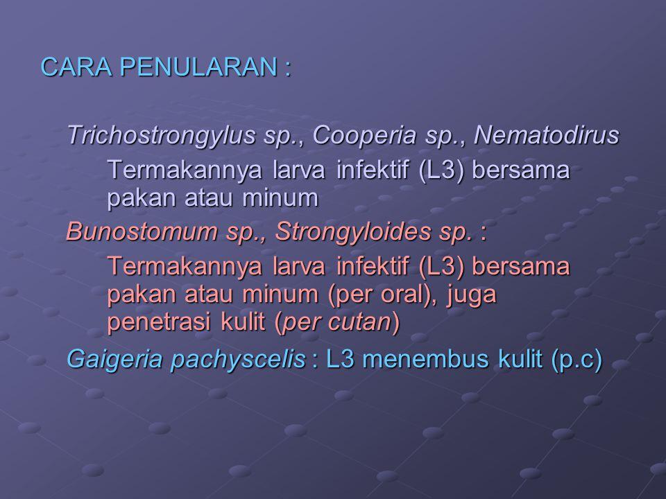 CARA PENULARAN : Trichostrongylus sp., Cooperia sp., Nematodirus Termakannya larva infektif (L3) bersama pakan atau minum Bunostomum sp., Strongyloide