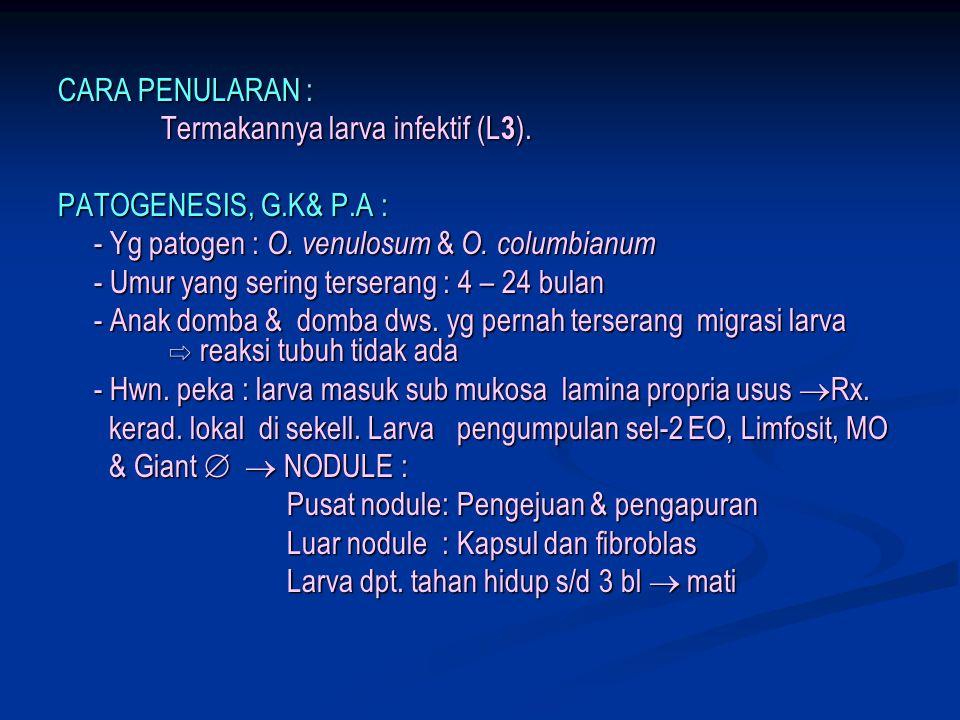 CARA PENULARAN : Termakannya larva infektif (L 3 ). Termakannya larva infektif (L 3 ). PATOGENESIS, G.K& P.A : - Yg patogen : O. venulosum & O. columb