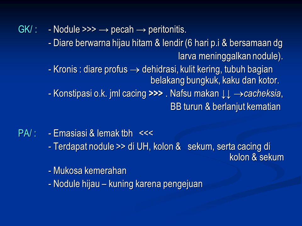 GK/ : - Nodule >>> → pecah → peritonitis.