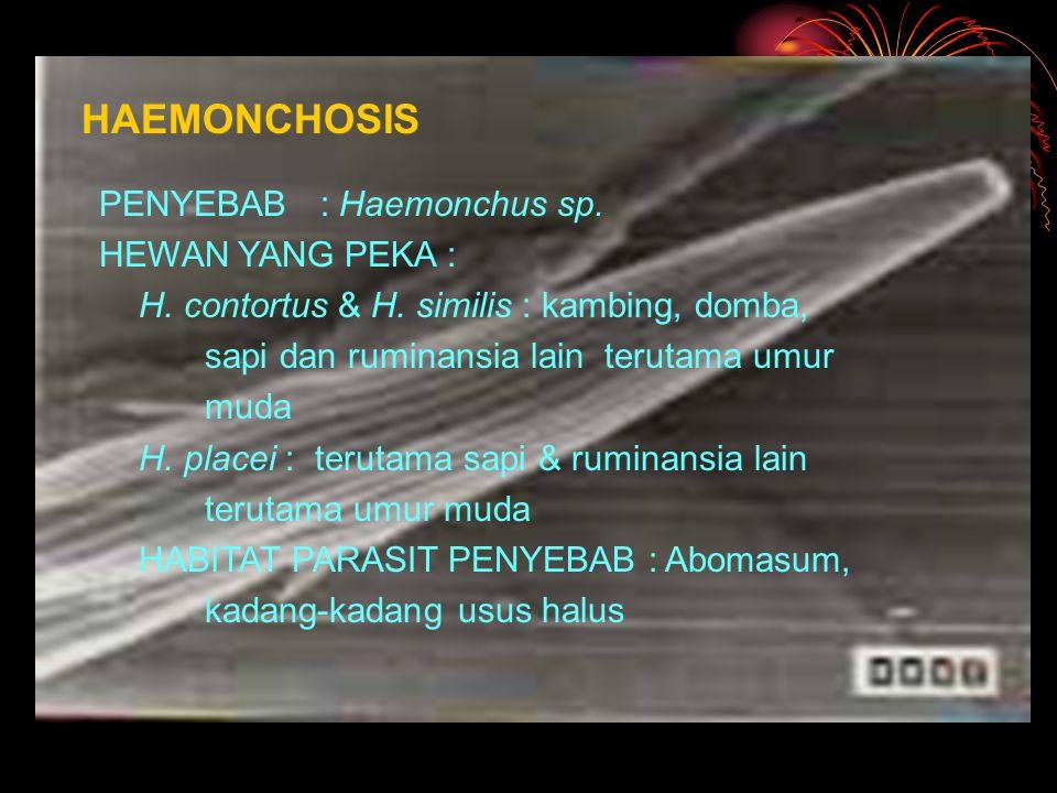 HAEMONCHOSIS PENYEBAB : Haemonchus sp.HEWAN YANG PEKA : H.