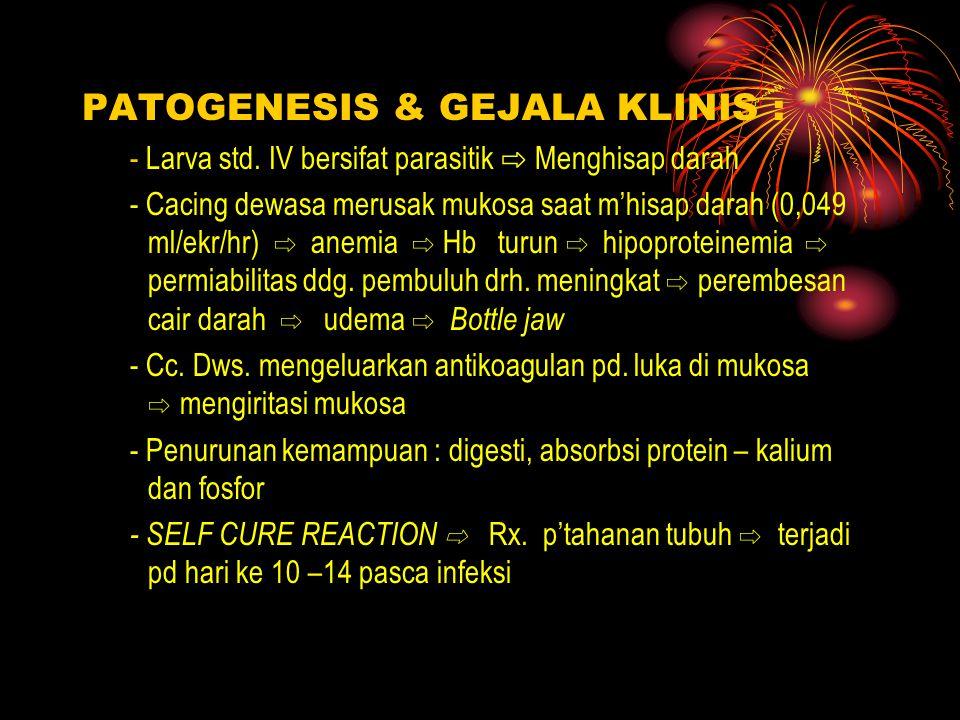 PATOGENESIS & GEJALA KLINIS : - Larva std.