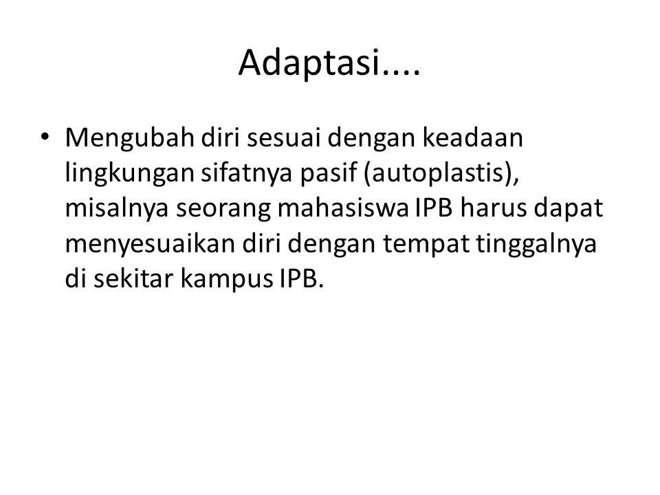 Adaptasi....