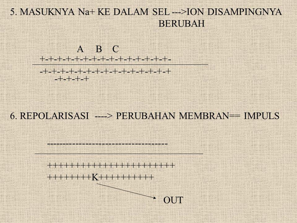 5. MASUKNYA Na+ KE DALAM SEL --->ION DISAMPINGNYA BERUBAH +-+-+-+-+-+-+-+-+-+-+-+-+-+-+- -+-+-+-+-+-+-+-+-+-+-+-+-+-+-+ A B C -+-+-+-+ 6. REPOLARISASI