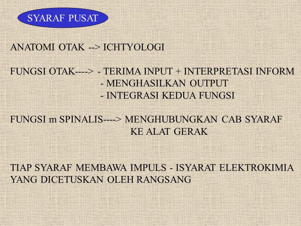 SYARAF PERIFER FUNGSI SNS---> INTERAKSI DAN RESPON THD LINGKUNGAN EKSTERNAL MENGATUR KERJA OTOT RANGKA TUBUH MEMBAWA INFORMASI SENSORIK YANG DISADARI ATAU TIDAK SY OTONOM ----> PENGATURAN FUNGSI VISERAL & INTERAKSI LINGKUNGAN INTERNA (FUNGSI VEGETATIF) FUNGSI : - MENGATUR KEGIATAN JANTUNG & PEMB DRH - MENGATUR KERJA OTOT HALUS - MENGATUR KERJA KELENJAR