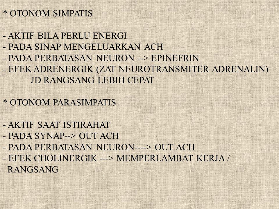 BENTUK UMUM SISTIM SYARAF 1.NEURON SENSORIS MEMBAWA ISYARAT DR ORGAN SENSORIK KE OTAK DAN M.