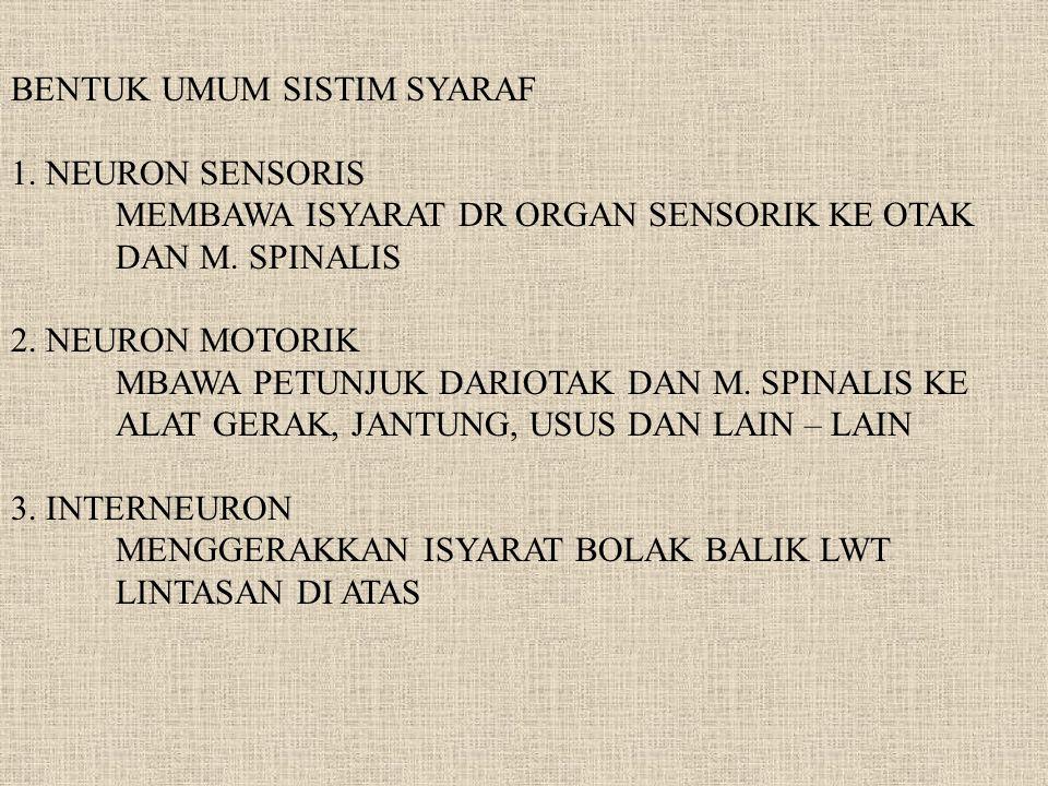BENTUK UMUM SISTIM SYARAF 1. NEURON SENSORIS MEMBAWA ISYARAT DR ORGAN SENSORIK KE OTAK DAN M. SPINALIS 2. NEURON MOTORIK MBAWA PETUNJUK DARIOTAK DAN M
