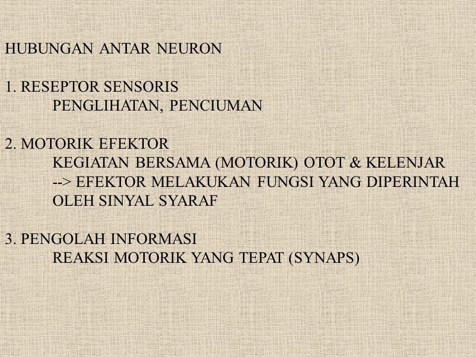 HUBUNGAN ANTAR NEURON 1. RESEPTOR SENSORIS PENGLIHATAN, PENCIUMAN 2. MOTORIK EFEKTOR KEGIATAN BERSAMA (MOTORIK) OTOT & KELENJAR --> EFEKTOR MELAKUKAN