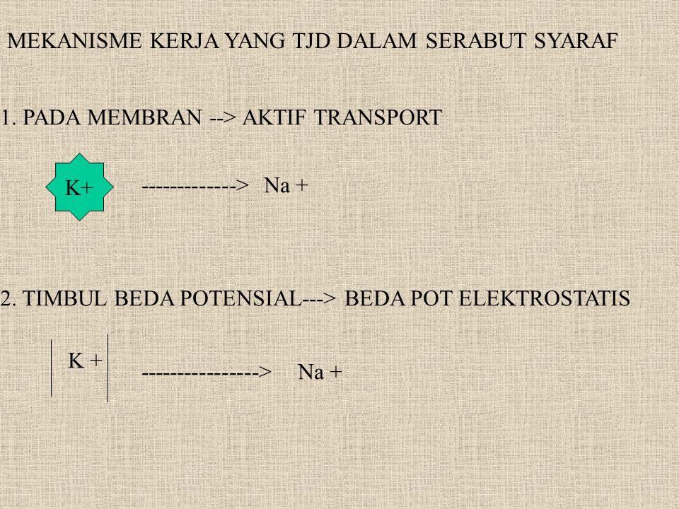 MEKANISME KERJA YANG TJD DALAM SERABUT SYARAF 1. PADA MEMBRAN --> AKTIF TRANSPORT K+ -------------> Na + 2. TIMBUL BEDA POTENSIAL---> BEDA POT ELEKTRO