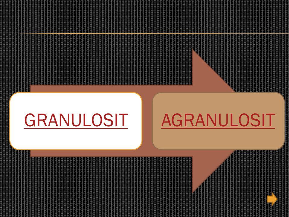 GRANULOSITAGRANULOSIT