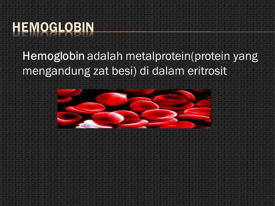 Hemoglobin adalah metalprotein(protein yang mengandung zat besi) di dalam eritrosit