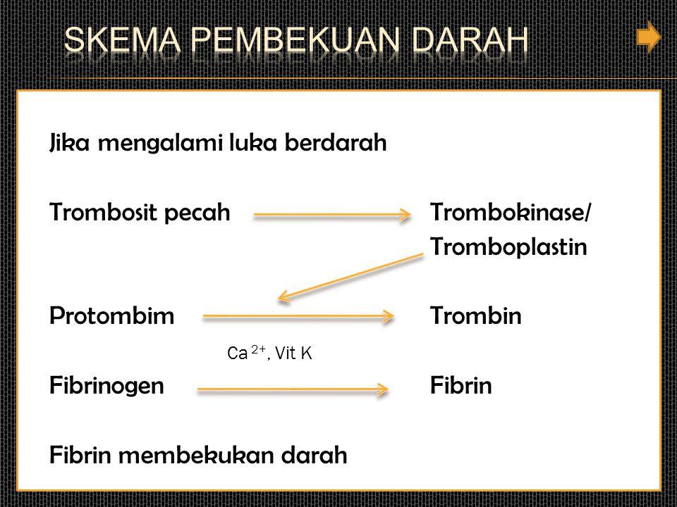 Jika mengalami luka berdarah Trombosit pecah Trombokinase/ Tromboplastin Protombim Trombin Ca 2+, Vit K Fibrinogen Fibrin Fibrin membekukan darah