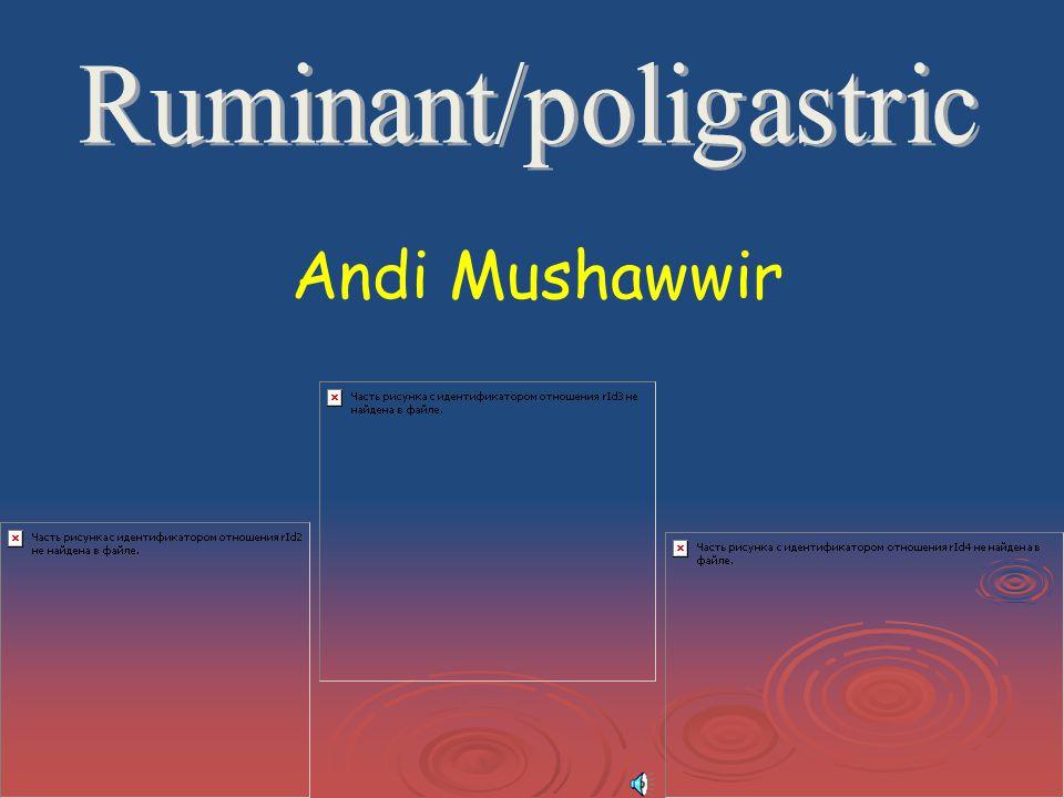 Andi Mushawwir